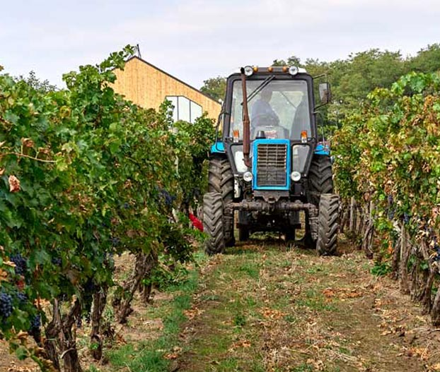 Agronomic costs of an agri-food company with ERP Software for Fruit and Vegetable centrals