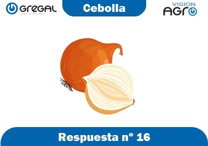 Cebolla-respuesta-nº16-adivinanzas de frutas-erp-agro