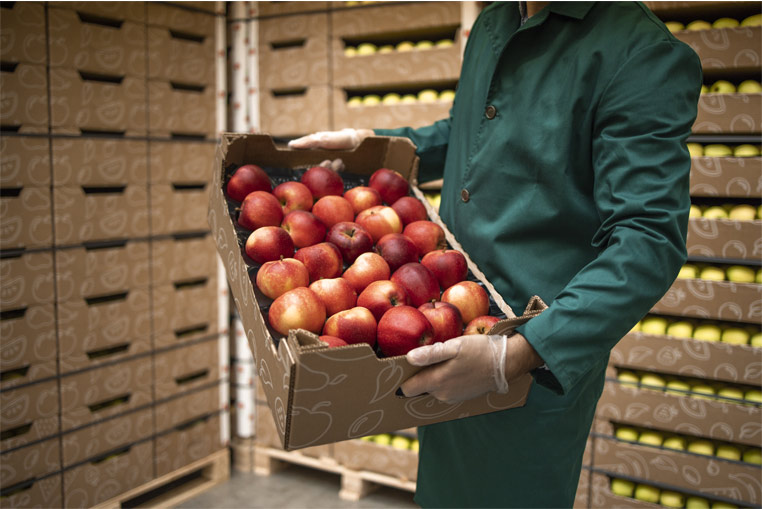 Control-of-fields-and-plots-software-ERP-Fruit and vegetable -company-