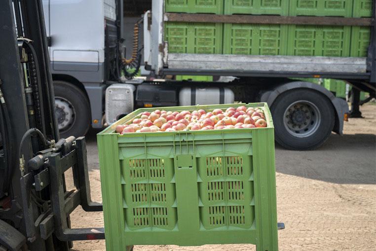 Costes y almacén de mercancía ERP Hortofrutícola