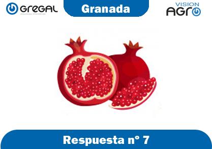 Granada-respuesta-nº7-adivinanzas de frutas-erp-agro