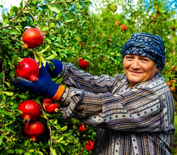 Human-Resources-ERP-Software-for-Agricultural-Cooperatives
