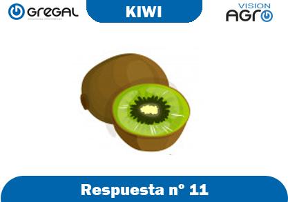 Kiwi-respuesta-nº11-adivinanzas de frutas-erp-agro
