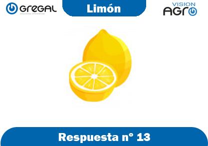Limón-respuesta-nº13-adivinanzas de frutas-erp-agro