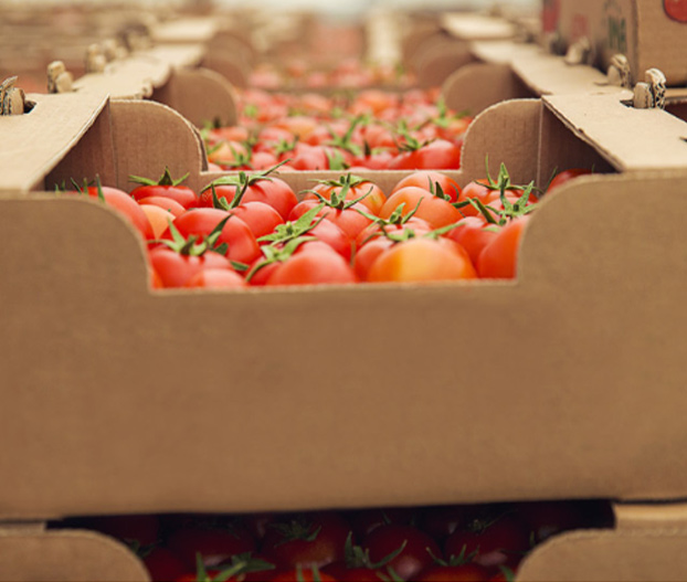 OPC OPCH managment with the ERP Software for Fruits and vegetables centrals.