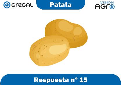 Patata-respuesta-nº15-adivinanzas de frutas-erp-agro
