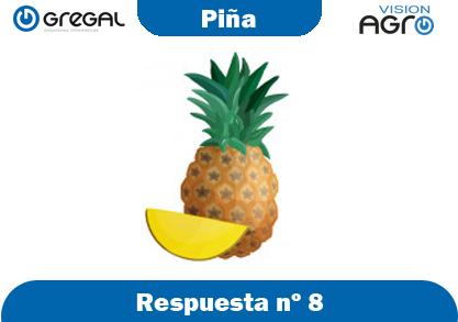 Piña-respuesta-nº8-adivinanzas de frutas-erp-agro