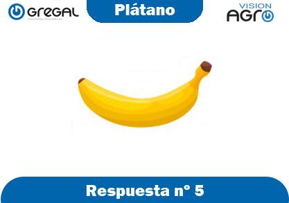 Plátano-respuesta-nº5-adivinanzas de frutas-erp-agro