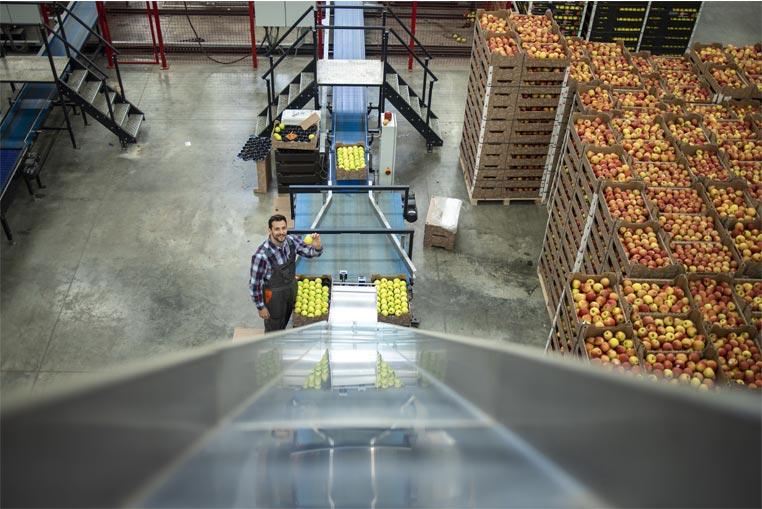 Proceso productivo con el ERP Software para Cooperativas agrícolas