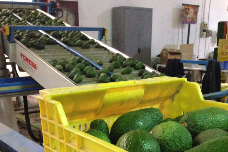 Production process with the Fruits and vegetables centrals