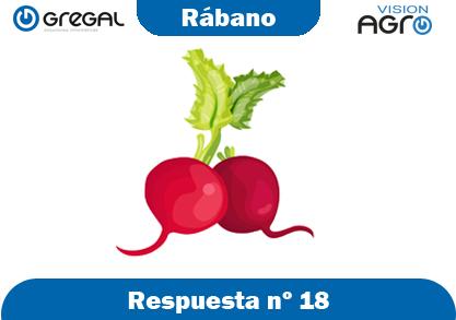 Rábano-respuesta-nº18-adivinanzas de frutas-erp-agro
