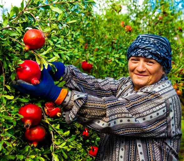 Recursos Humanos ERP Software para Cooperativas agrícolas