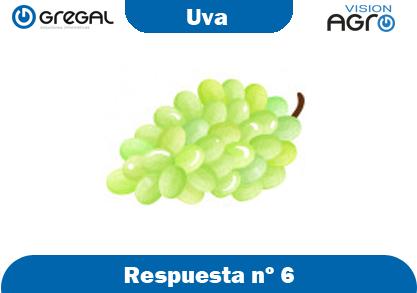 Uva-respuesta-nº6-adivinanzas de frutas-erp-agro