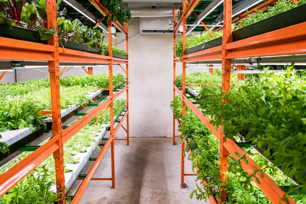 Warehouse and merchandise management in our Erp seedbeds and nursery software 1.