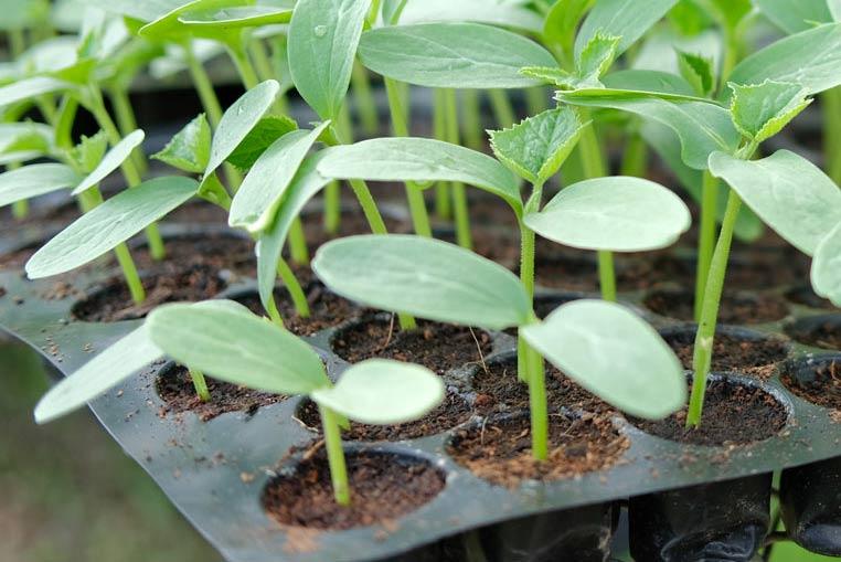 identificación semillero o vivero