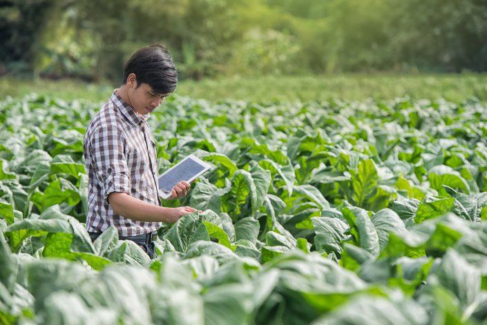 La revolucion digital en el sector agroalimentario