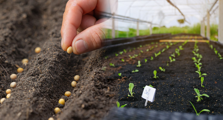 traceability-seedbed-nursery-1